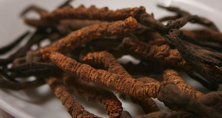 chinese medecine cordyceps on table mat and white plate