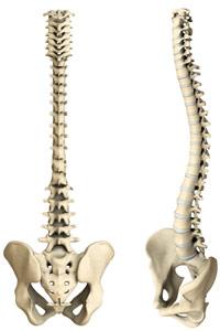 hrbtenica